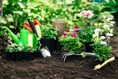 Flowers in pot before planting and some tools at summer garden