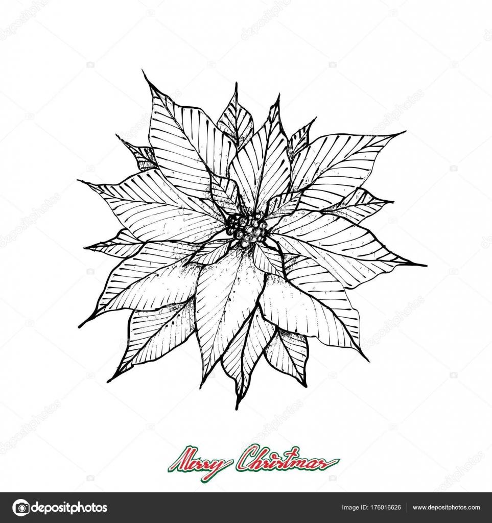 Weihnachten Weihnachtsstern oder Euphorbia Pulcherrima Blume ...