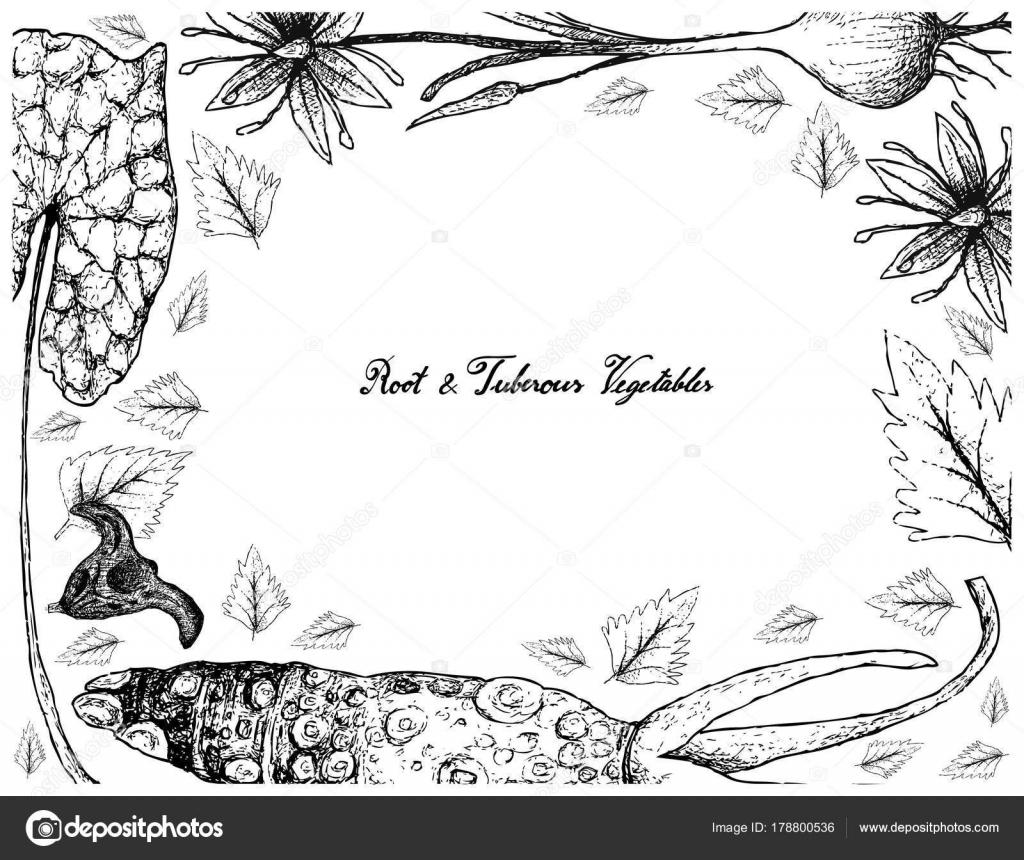 Marco dibujado a mano de raíz y verduras tuberosas — Archivo ...