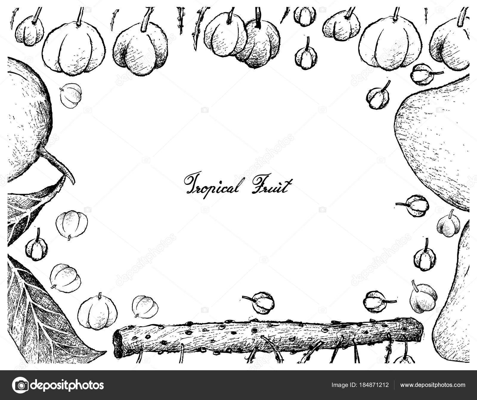 Hand Drawn Frame of Otaheite Gooseberry and Mango Fruits — Stock ...