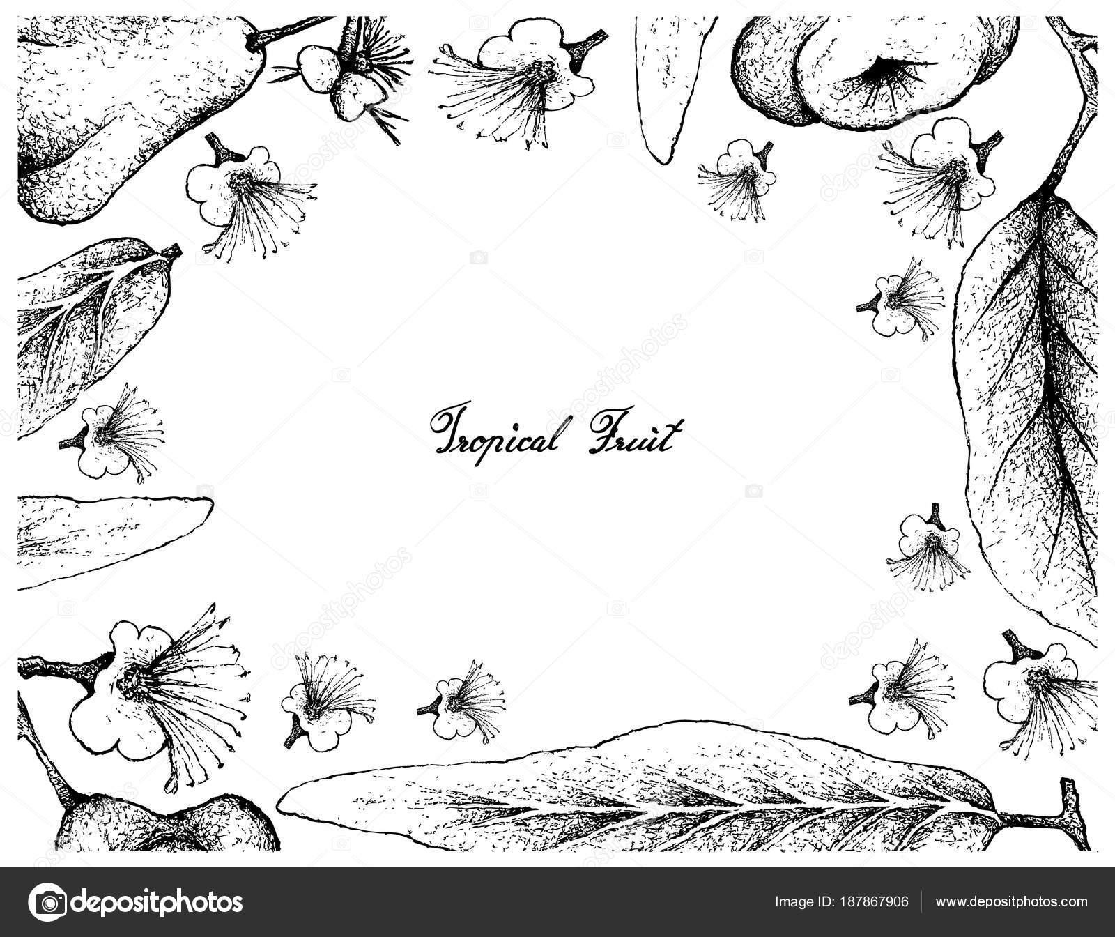 Marco dibujado a mano de Java y Pomarrosa acuosa — Vector de stock ...
