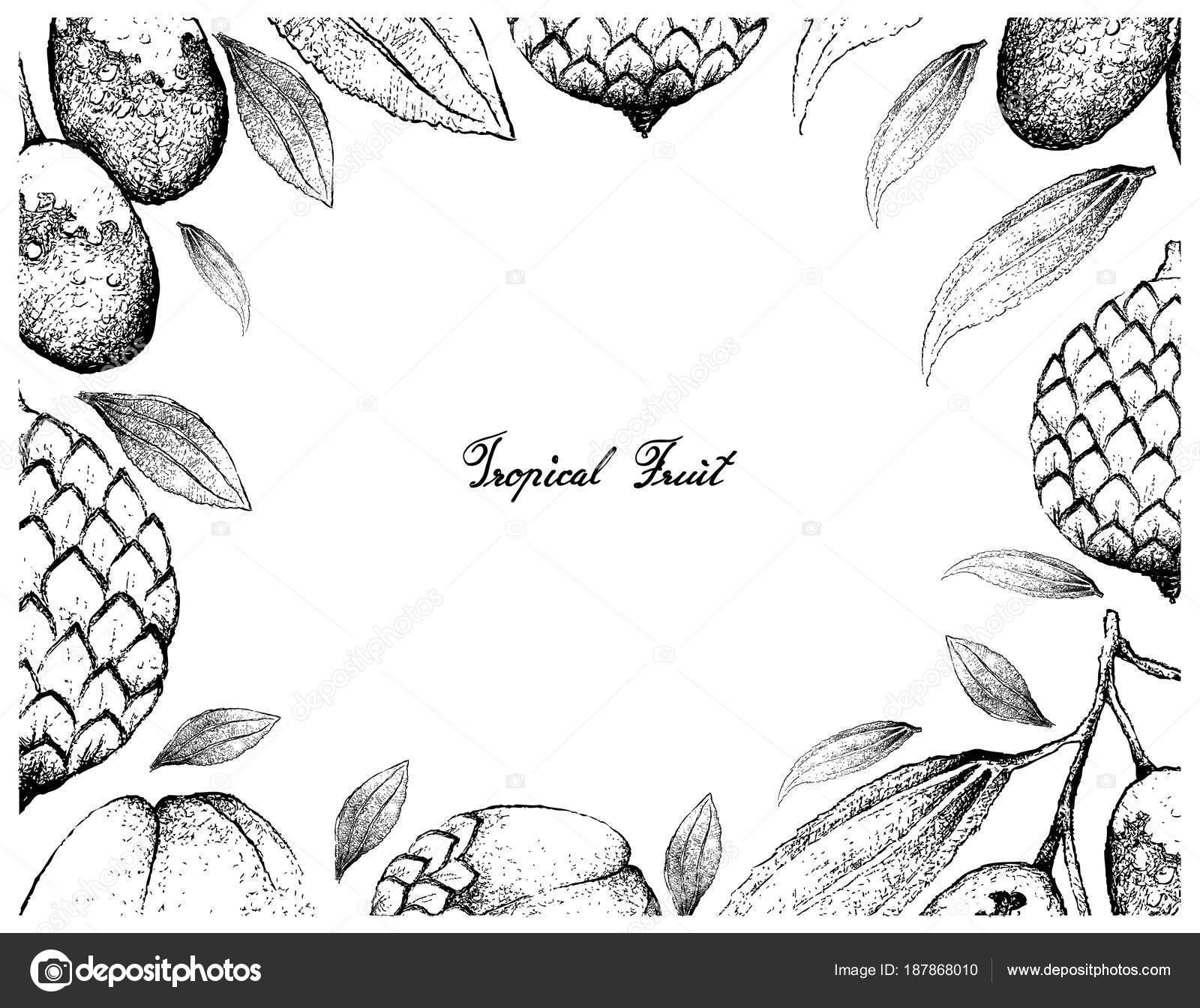Marco dibujado a mano de azufaifa y rota — Vector de stock © Iamnee ...