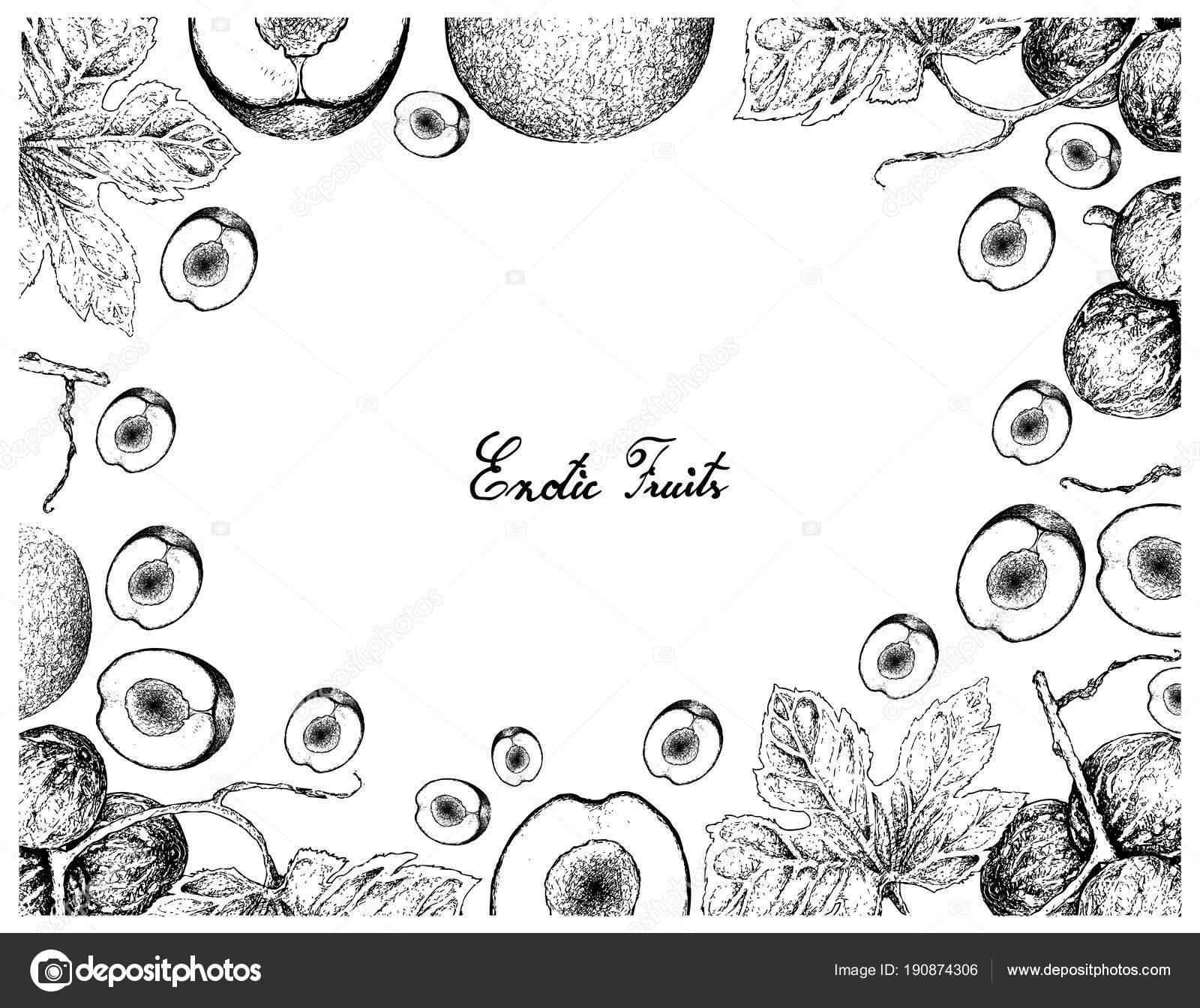 Hand gezeichneten Rahmen von Davidson Pflaumen und Diplocyclos ...