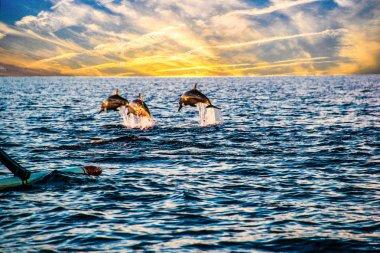 Indonesia Bali Lovina Sunrise Dolphin