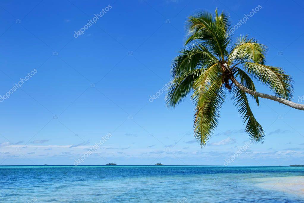 Leaning palm tree at Makaha'a island near Tongatapu island in To