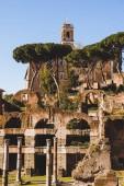 Säulen und Bäume an den Ruinen des römischen Forums in Rom, Italien