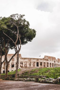 green trees in front of ancient Colosseum ruins on cloudy day, Rome, Italy