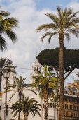 Fotografie palm trees and white building in Rome, Italy