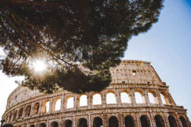 Bottom view of Colosseum ruins with tree and sunshine in Rome, Italy stock vector