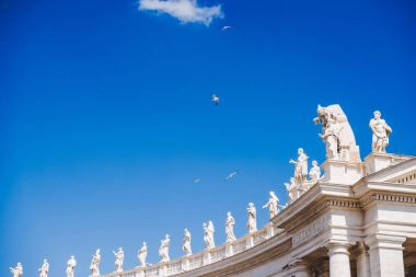 bottom view of birds flying above statues at St Peters Square in Vatican, Italy
