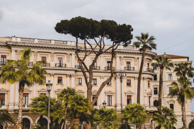 palm trees and old building in Rome, Italy