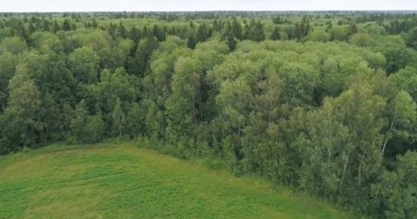 Gyönyörű zöld nyári erdő egy vidéki tájon. 4K 60 fps légi járat