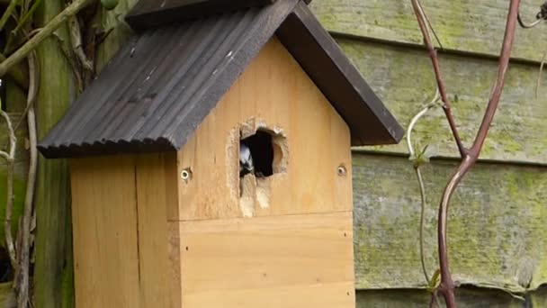 blue tit bird house pecking bird