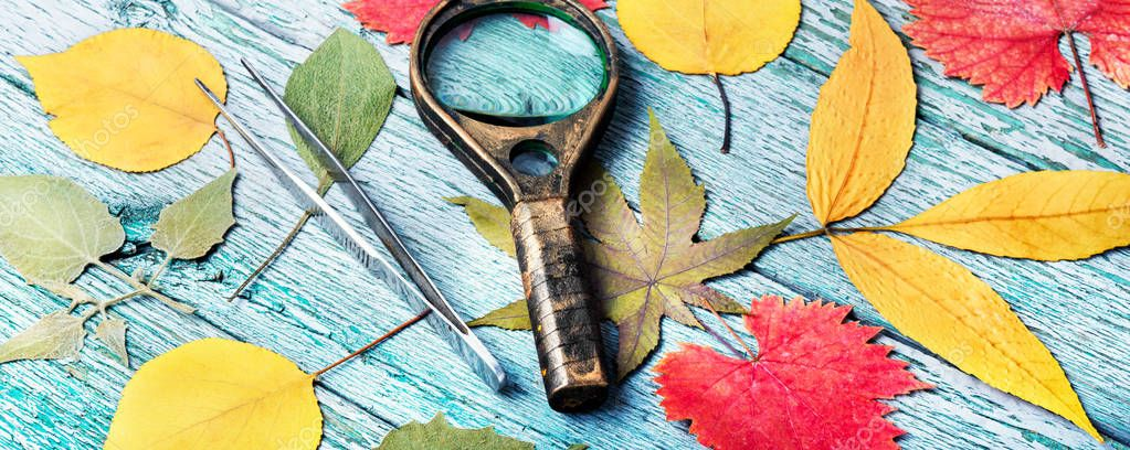 October leaves for herbarium