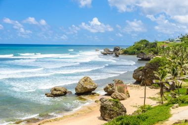 Coastal line with palms and stones on Bathsheba beach, East coast of Barbados island, Caribbean.