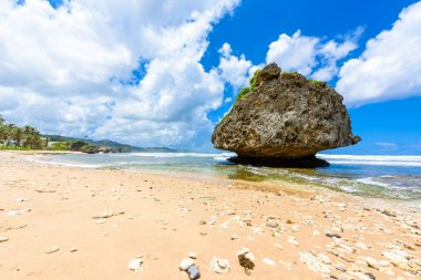 Rock formation on beach of Bathsheba, East coast of Barbados island, Caribbean.