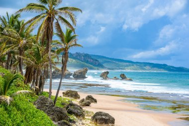 Rich vegetation of Bathsheba beach, East coast of Barbados island, Caribbean.