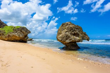 Closeup of big stones on beach of Bathsheba, East coast of Barbados island, Caribbean.
