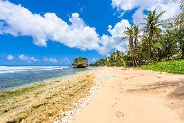 Bottom view of Bathsheba beach, East coast of Barbados island, Caribbean.