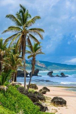 Rich vegetation of Bathsheba beach, East coast of Barbados island, Caribbean.