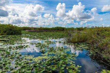View from Anhinga Trail of Everglades National Park, Florida, USA.
