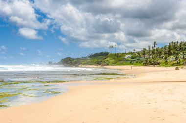 Deserted beach of Bathsheba, East coast of Barbados island, Caribbean.