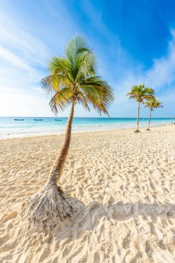 "Картина, постер, плакат, фотообои ""пляж playa feliso на восходе солнца, тулум, мексика . природа картина художники города"", артикул 193071976"