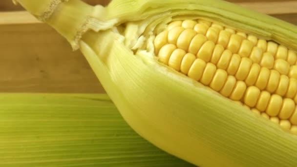 Kukuřičný klacek na tmavém pozadí. kukuřice cukrová
