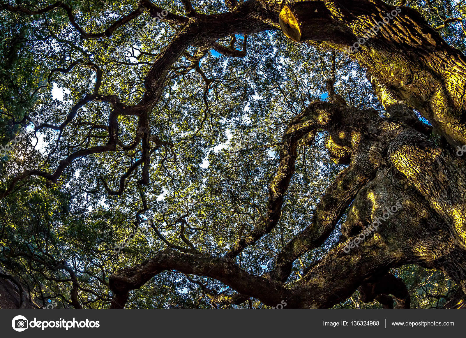 Angel Oak Tree on John's Island South Carolina — Stock Photo