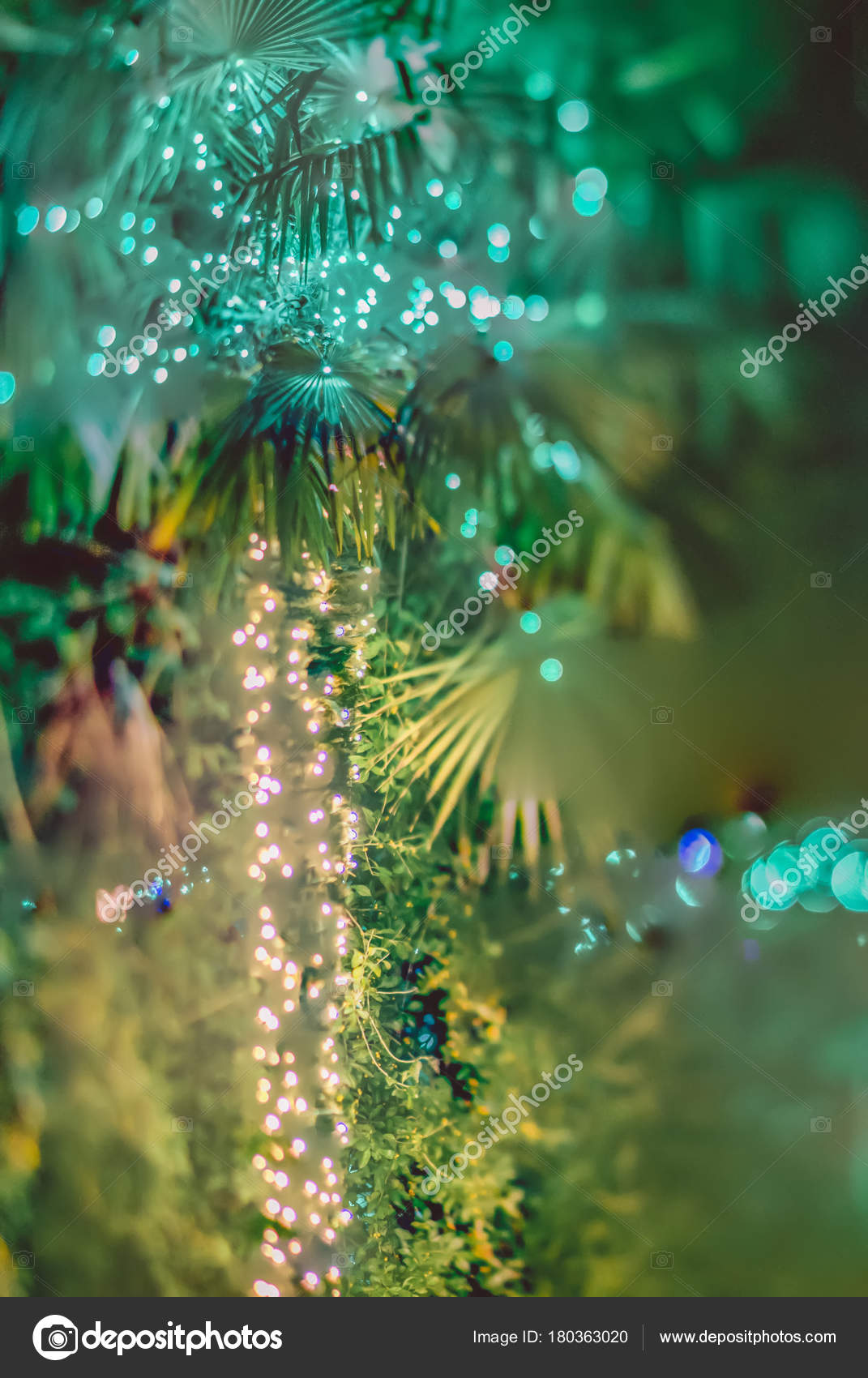 palm trees decorated christmas lights gardens stock photo