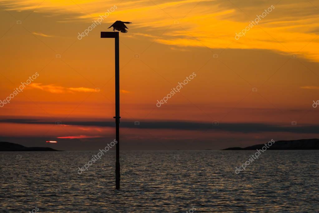 Comorant at Sunset