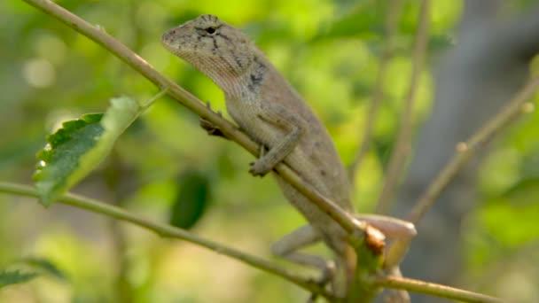 animal lizard nature wild
