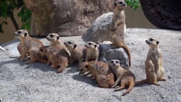earth peoples funny cute animal