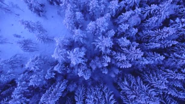 zasněžené stromy nad zimní krajinou