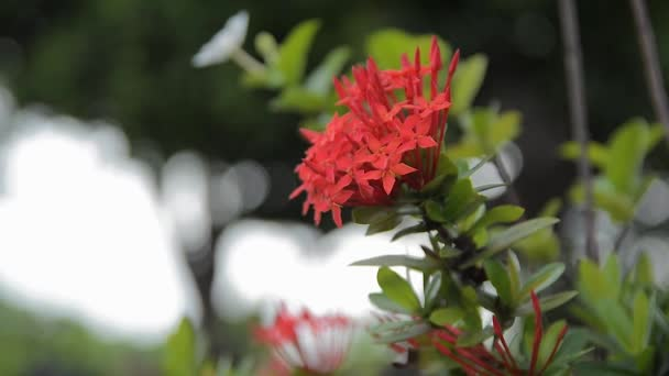 Flower červená přírodní zahrada barevné