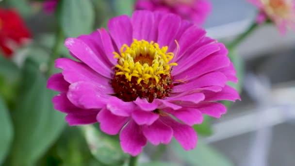 virág lila lila szín kert