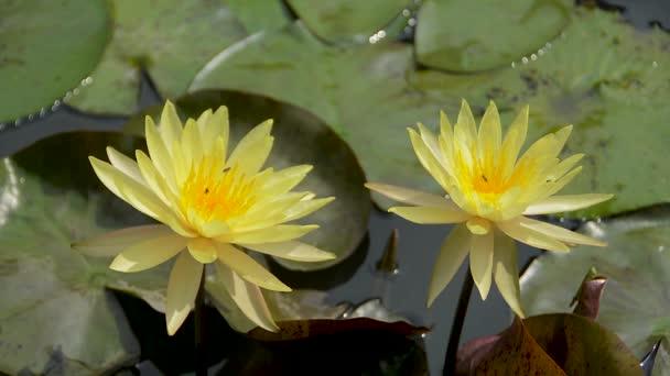 természet sárga virág