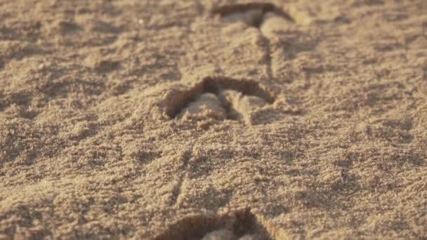 footprints gull animal prints beach