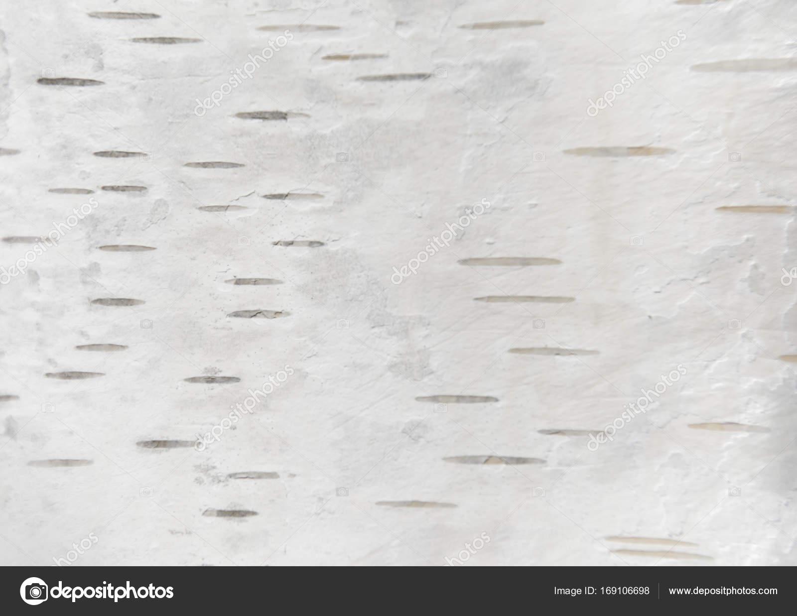 white birch tree texture  u2014 stock photo  u00a9 alexytrener