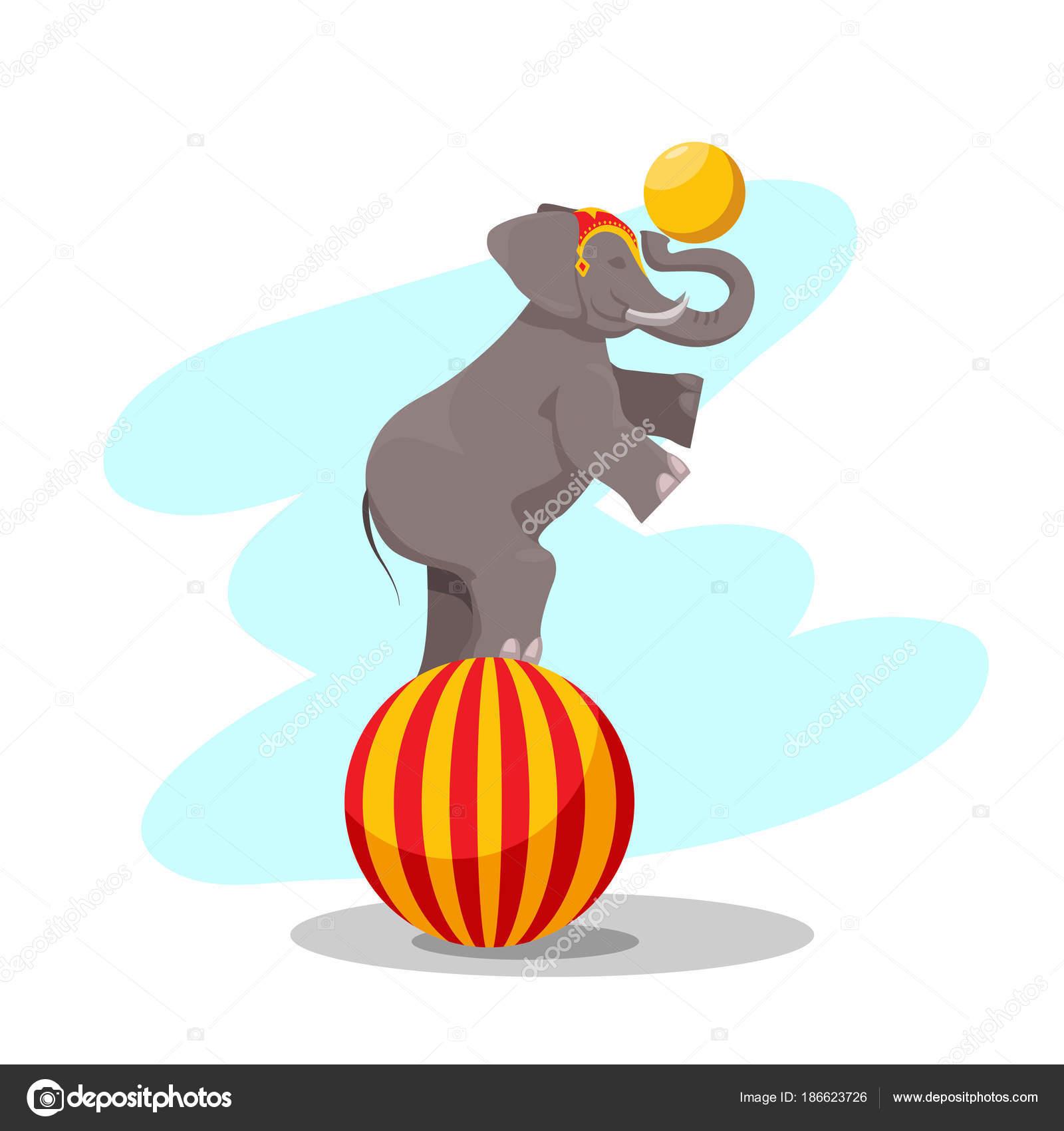 Performance Circo Elefante Sobre Una Bola Grande Con Una Bola ...