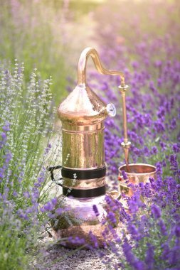 Distilling apparatus alembic on the ground with esential oil between of lavender field lines