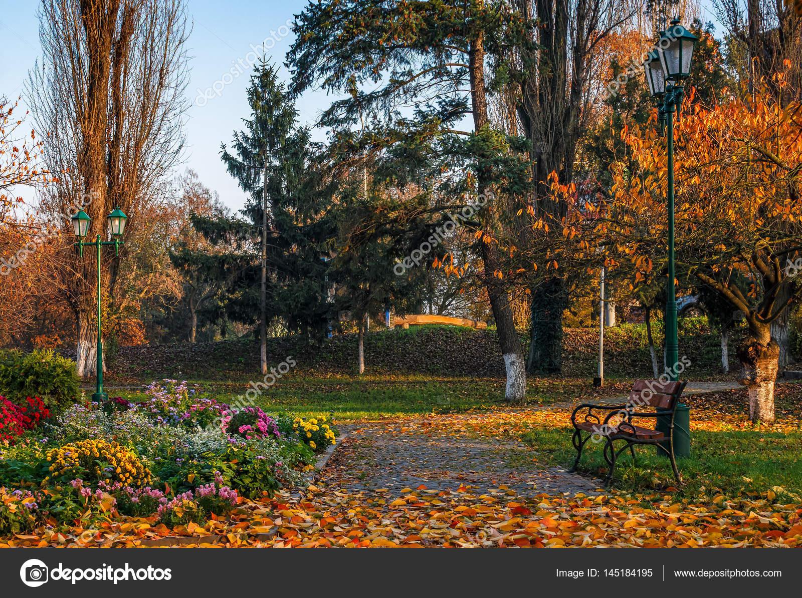 flower blossom in city park in autumn — Stock Photo © pellinni ...
