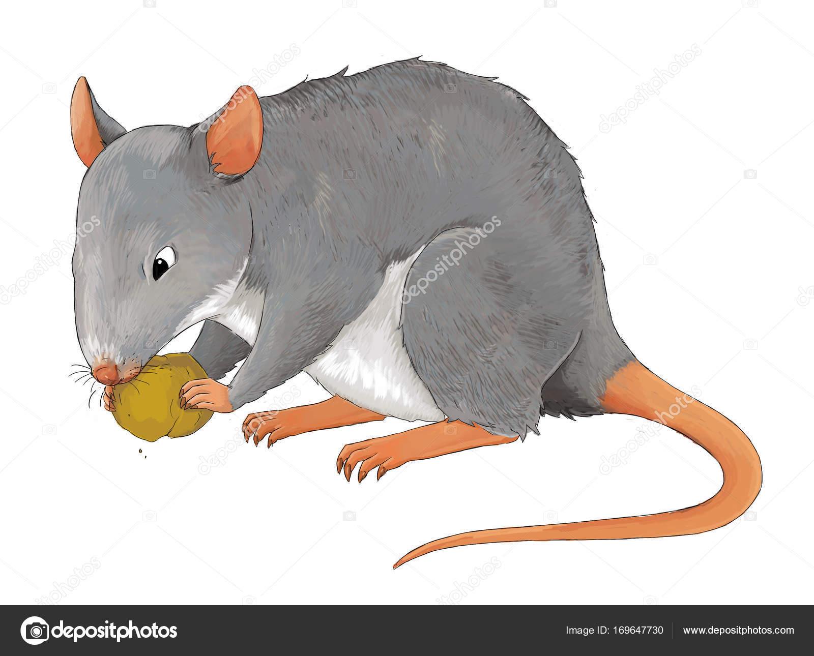 Dibujos Animados Animales Ilustración Rata Cierta