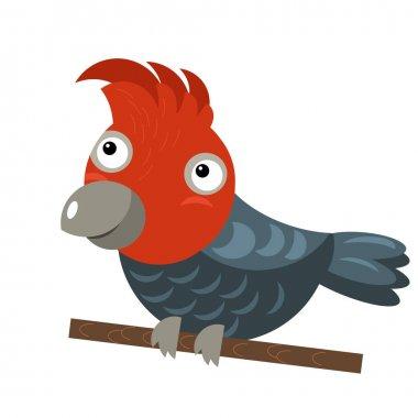 Cartoon australian animal bird cockatoo on white background illustration for children stock vector