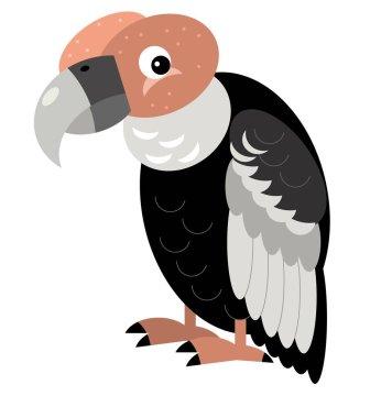 Cartoon american animal bird condor on white background illustration for children stock vector