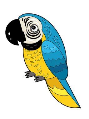 Cartoon american animal bird parrot on white background illustration for children stock vector