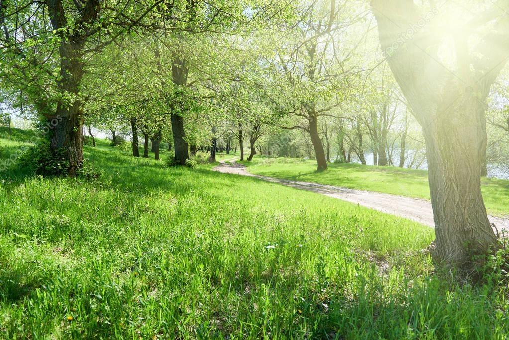 Фотообои яркий летний лес с солнечным светом в солнечный день, красивый пейзаж, зеленая трава и деревья