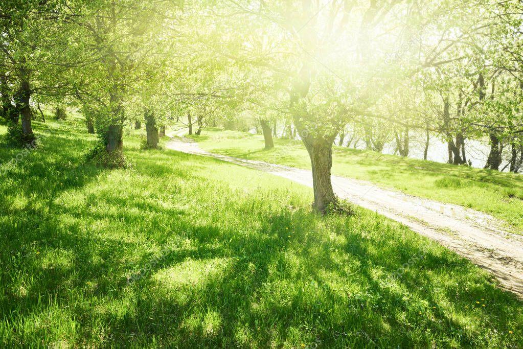 Фотообои яркий летний лес в солнечный день, красивый пейзаж, зеленая трава и деревья