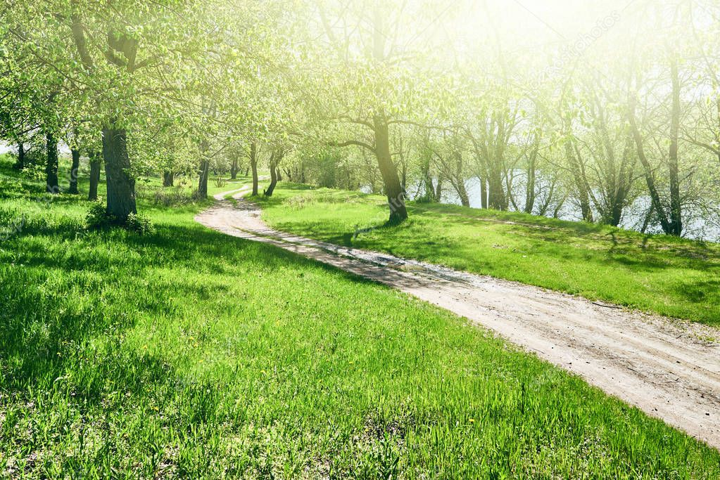 Фотообои bright summer forest with sunlight at sunny day, beautiful landscape, green grass and trees