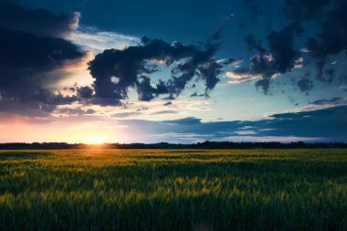 beautiful sunset in green field, summer landscape, bright colorful sky and clouds as background, green wheat